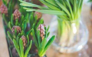 Plants in Flat